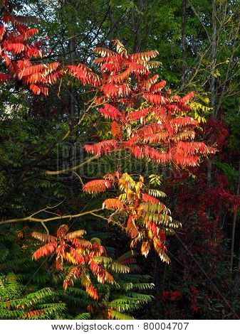 colorful exotic tree
