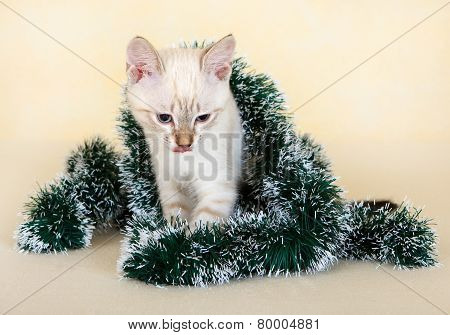 Thai kitten in Christmas tinsel.