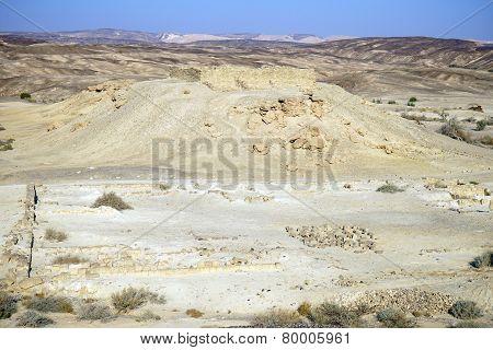 Ancient Moa