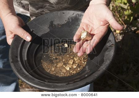 Man Finding Gold Nuggets