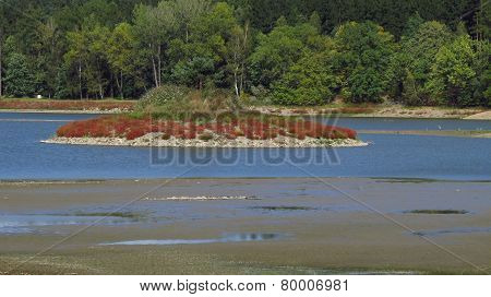 island in the drying pond
