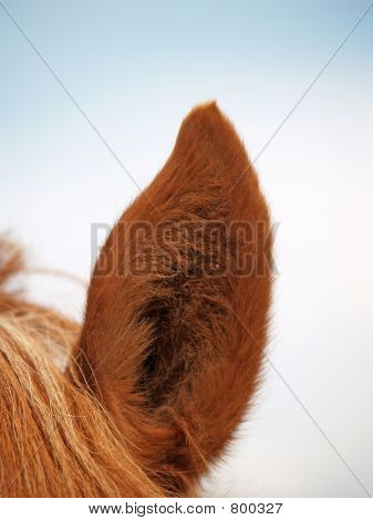 Ear of the horse