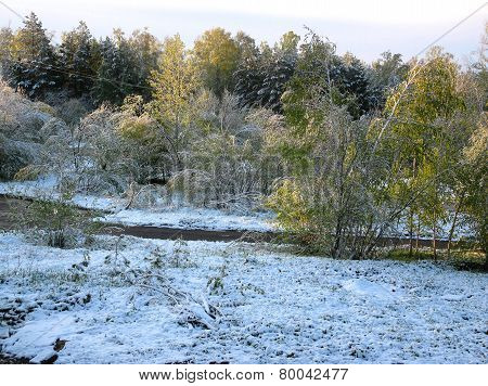Green Trees And Snow