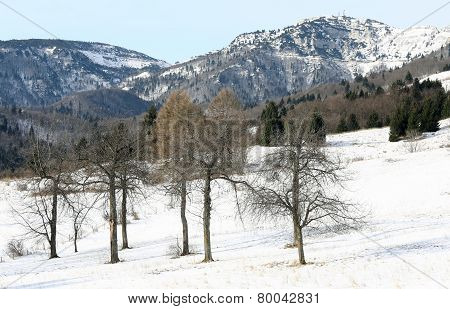 Trees In The Mountain And High Mountain In The Background