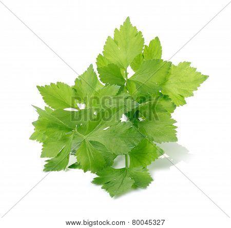 Celery On Over White Background