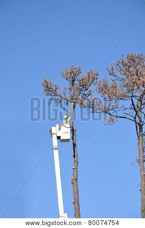 Cutting Down A Dead Tree