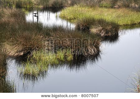 Bon Secour National Wildlife Refuge in Gulf Shores Alabama poster