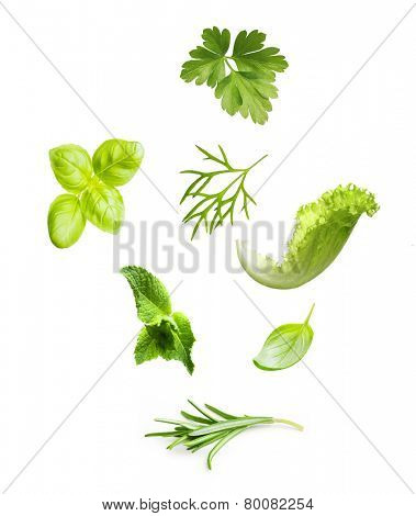 Parsley herb, basil leaves, dill, mint, lettuce and rosemary spice isolated on white background.
