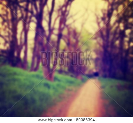 an out of focus path going though a forest or park with trees with autumn leaves done with a retro vintage instagram filter (good for placing text over)