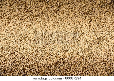 Background Texture Of Green Un-roasted Coffee Beans.