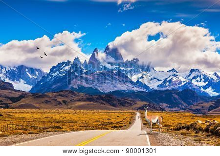 The highway crosses  Patagonia and leads to snow-capped peaks of Mount Fitzroy. On the side of road is graceful guanaco