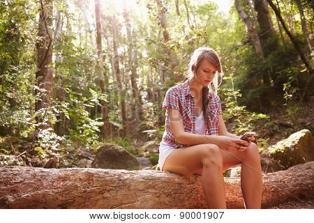 Woman Sits On Tree Trunk In Forest Using Mobile Phone
