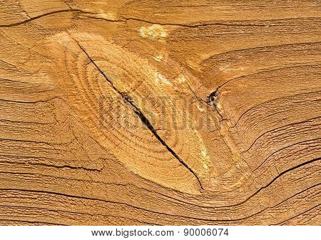 Wood, Structure