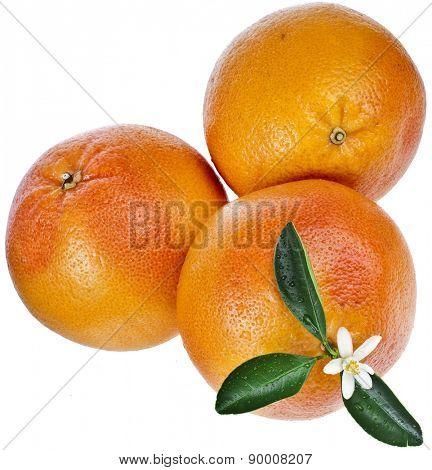 citrus grapefruit detail close up isolated on white background