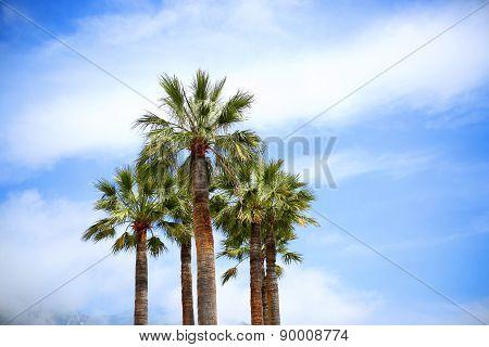 Palm trees on the blue sky