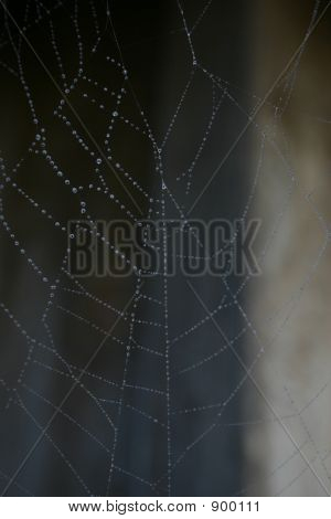spider web with dew on it in natural light poster
