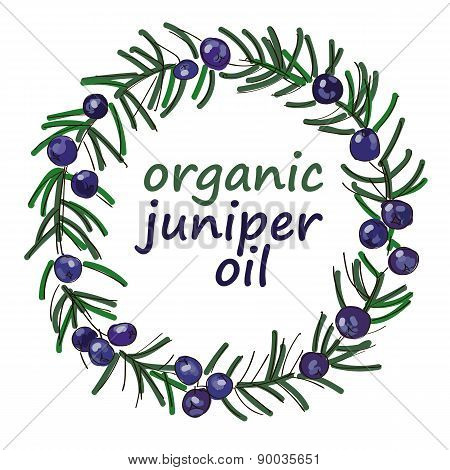 Organic Juniper Oil Drawing Wreath Vector