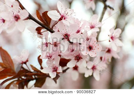 Branches of flowering tree, closeup