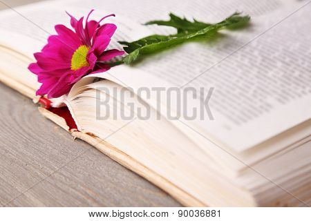 Single flower with open book on wooden table, closeup