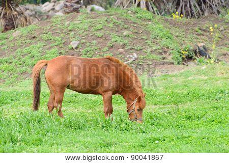Pony In A Green Field