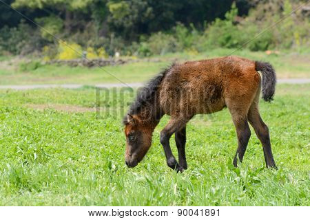 Young Pony In A Green Field