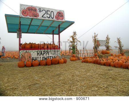 U Pick Pumpkin Stand