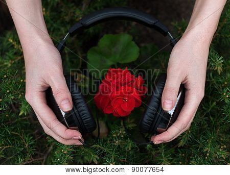 geranium listening to music