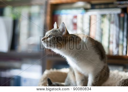 Cat Looks At The Window