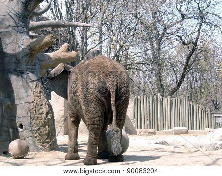 An Elephant's Tail