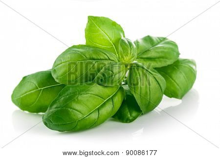 Fresh green leaf basil. Isolated on white background