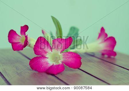 Desert Rose On Wood