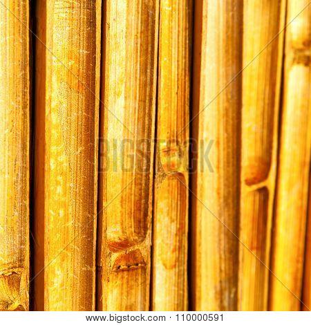Cross Bamboo  Kho Phangan Bay   And South