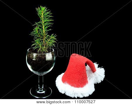 A small Christmas tree with a cap of Santa Claus