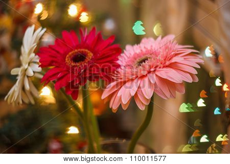 Gerbera With Blur And Bokeh