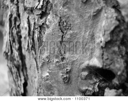 Tree Bark Close Up