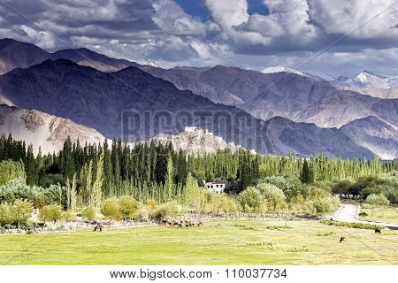 View of Thiksey gompa through the Indus valley in Ladakh, India.