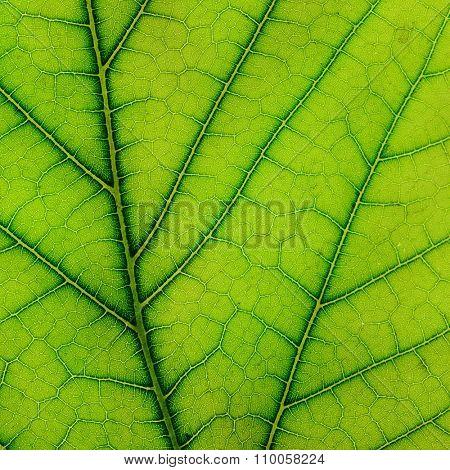 fresh leaf of plant close up
