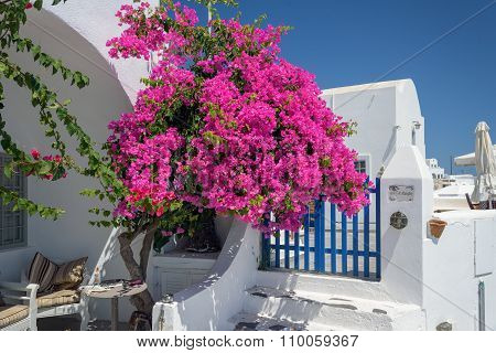 Colorful quiet backyard with beautiful flowers and classic traditional architecture in Santorini, Fi