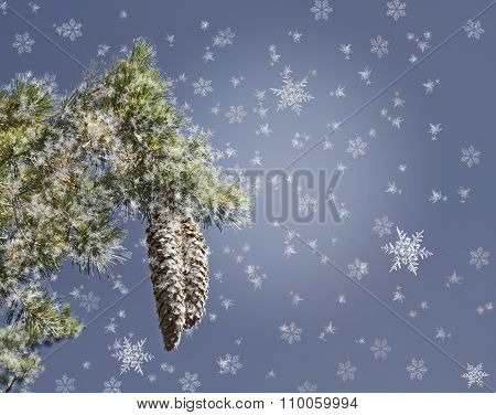 Christmas Background With Pine Branch And Snowflakes