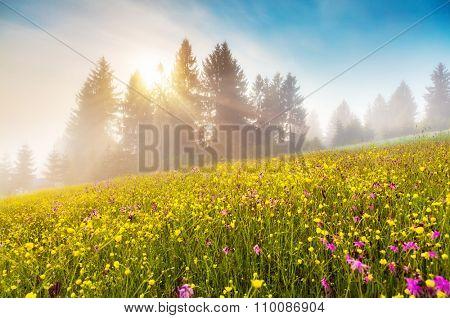 Beautiful view of rural alpine landscape. Dramatic and picturesque morning scene. Warm toning effect Carpathian, Ukraine, Europe. Beauty world.