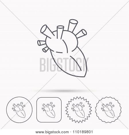 Heart icon. Human organ sign. Transplantation.
