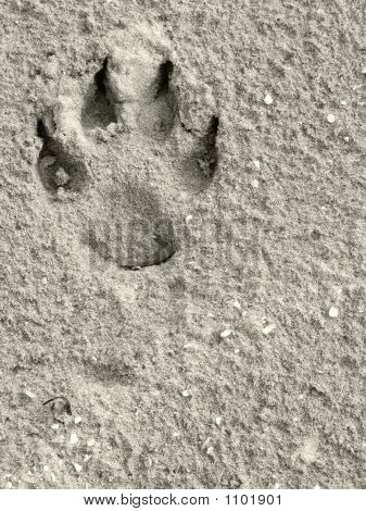 macro shot of wildlife tracks left in sand poster