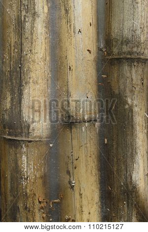 Closeup Of Old Grunge Bamboo Fence