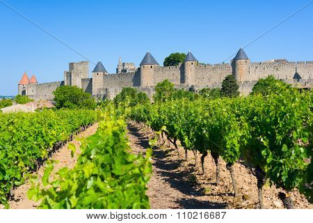 Vineyards Near The Cite In Carcassone