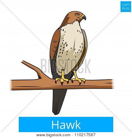 Hawk bird learn birds educational game vector