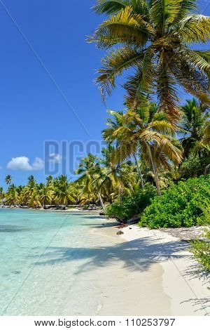 Caribbean Beach With Palm Trees, Crystal Water And White Sand