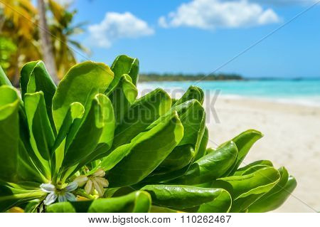 Tropical plant leaves, blue sea and exotic white sand beach ander the sun