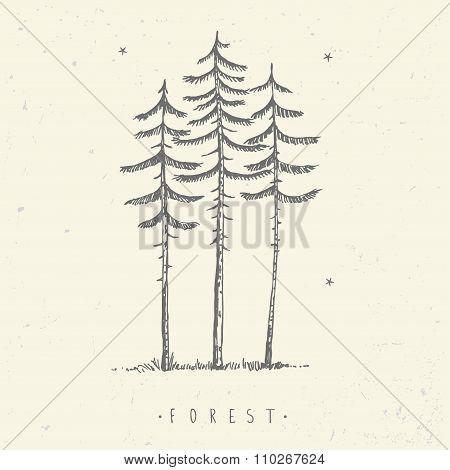 pine minimalism