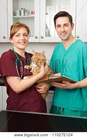 Vets In Surgery Looking After Pet Cat