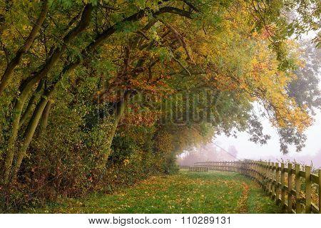 Autumn In Capstone Farm Country Park
